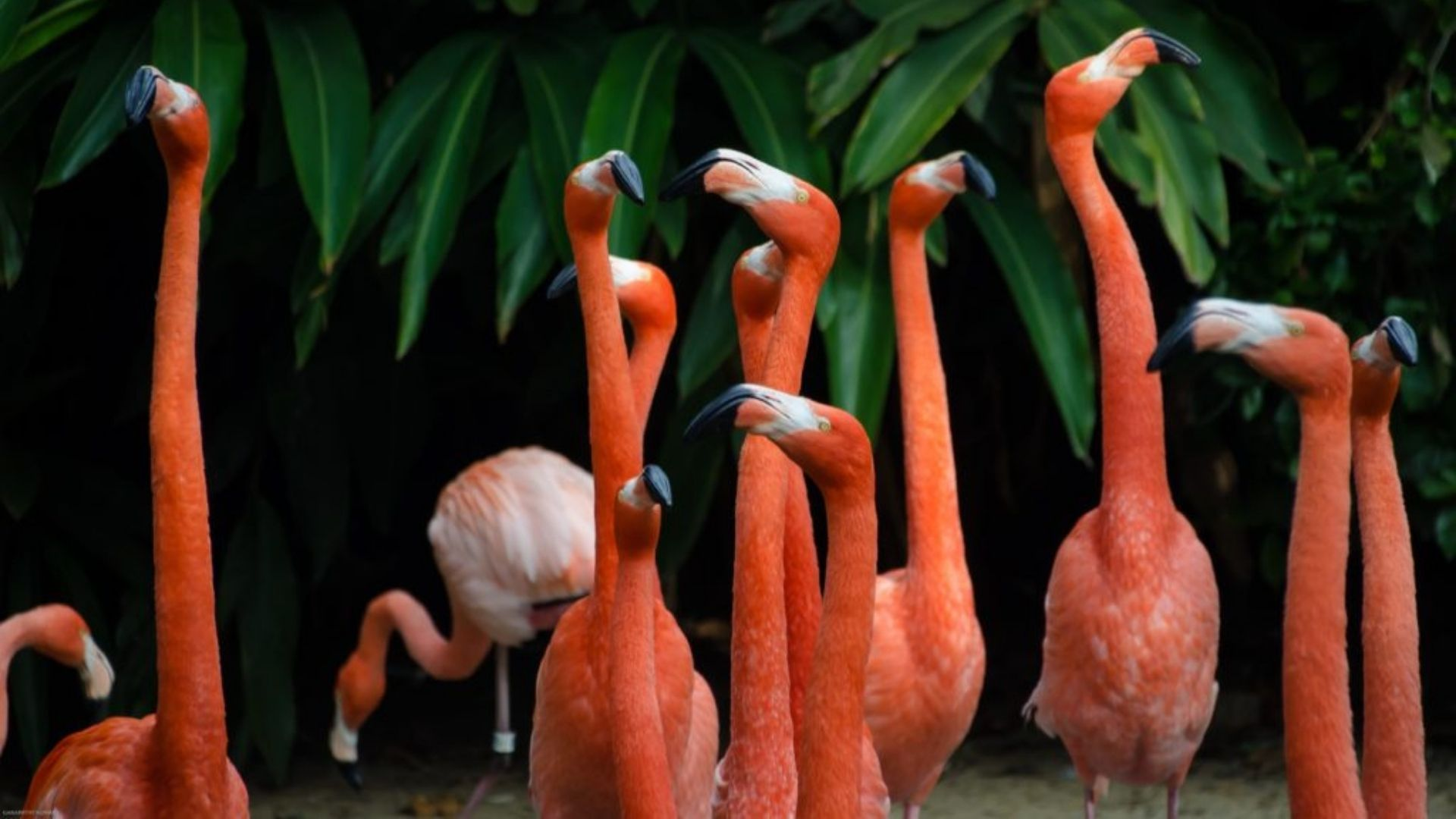 Flamingos in einer Gruppe
